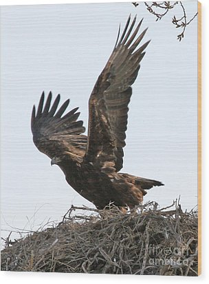 Wood Print featuring the photograph Golden Eagle Takes Off by Bill Gabbert