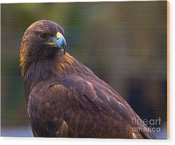 Golden Eagle Wood Print by Terry Horstman