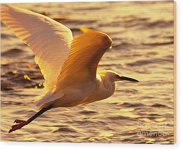 Golden Egret Bird Nature Fine Photography Yellow Orange Print  Wood Print