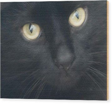 Golden Eyes Wood Print by Rhonda Humphreys