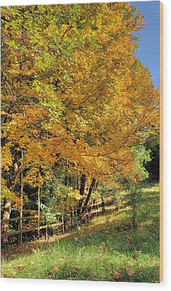 Wood Print featuring the photograph Golden Fenceline by Gordon Elwell