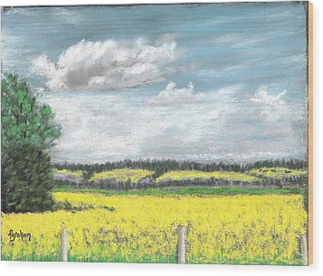 Golden Fields Of Alberta Wood Print by Fiona Graham