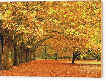 Golden Forest Wood Print by Boon Mee