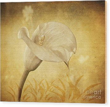 Golden Glow Cala Lily Wood Print by Shirley Mangini