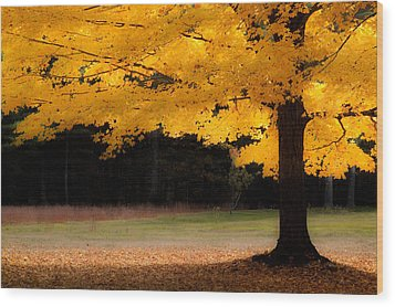 Golden Glow Of Autumn Fall Colors Wood Print by Jeff Folger