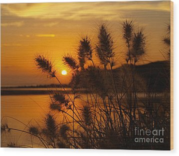 Wood Print featuring the photograph Golden Glow by Trena Mara