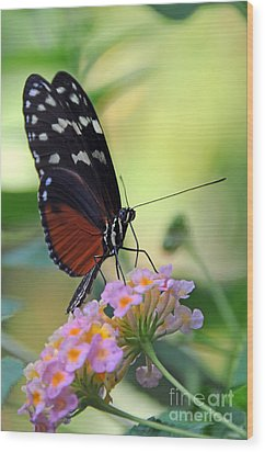 Golden Helicon Butterfly - Say What Wood Print