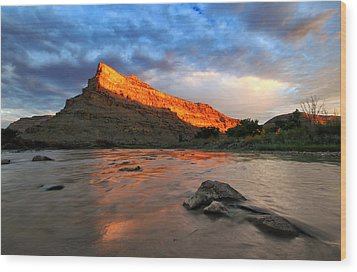 Wood Print featuring the photograph Golden Highlights by Ronda Kimbrow