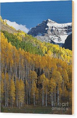 Golden Hillside Wood Print by Steven Reed