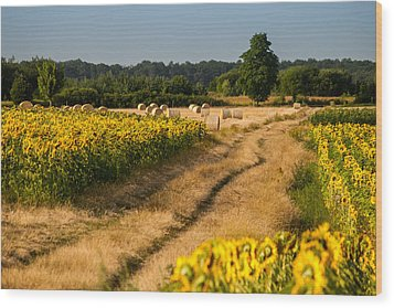 Golden Hour On Country Road Wood Print by Davorin Mance