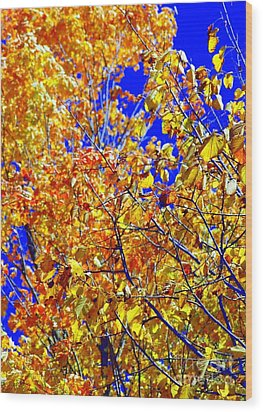 Golden Wood Print by Kathleen Struckle