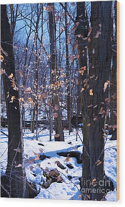 Wood Print featuring the photograph Golden Leaves by Rafael Quirindongo