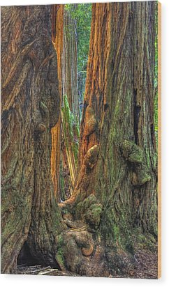 Golden Light Reaches The Grove Floor Muir Woods National Monument Late Winter Early Afternoon Wood Print by Michael Mazaika