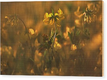 Golden Light Wood Print by Thomas Born