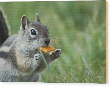 Wood Print featuring the photograph Golden-mantled Ground Squirrel by Susan D Moody