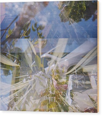 Golden Mean Holga Garden 1 Wood Print by Carolina Liechtenstein