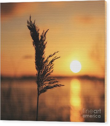 Golden Morning Wood Print by LHJB Photography