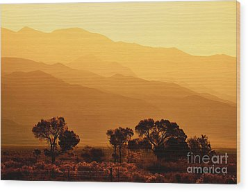 Golden Mountain Light Wood Print by David Lawson