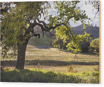 Golden Oaks Wood Print by Sharon Foster