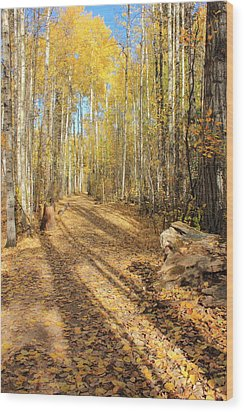 Golden Path Wood Print by Jim Sauchyn