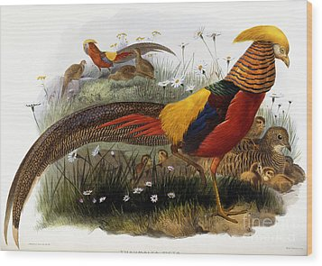 Golden Pheasants Wood Print by Joseph Wolf