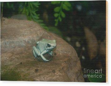 Golden Poison Frog Mint Green Morph Wood Print by Mark Newman