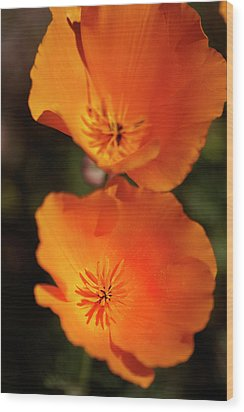Golden Poppyies Wood Print by Gilbert Artiaga