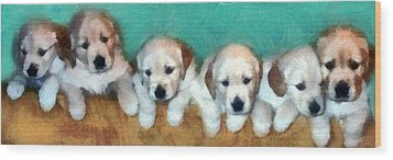 Golden Puppies Wood Print by Michelle Calkins