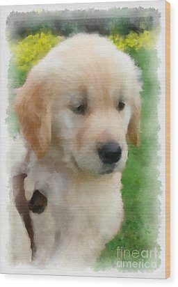 Golden Puppy Owen Wood Print by Betsy Cotton