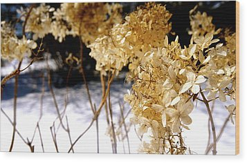 Golden Purity Wood Print by Danielle  Broussard