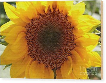 Golden Ratio Sunflower Wood Print by Kerri Mortenson