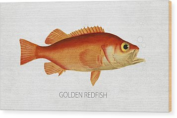 Golden Redfish Wood Print by Aged Pixel