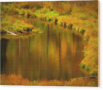 Golden Reflections Wood Print by Karen Shackles