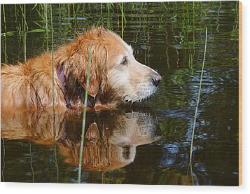 Golden Reflections Wood Print by Sandra Updyke
