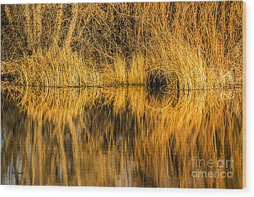 Golden Reflections Wood Print by Sue Smith