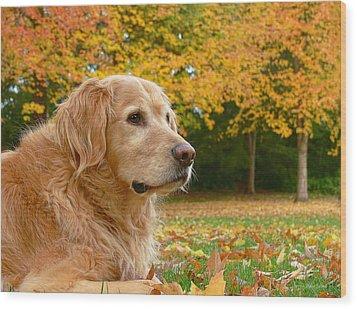 Golden Retriever Dog Autumn Leaves Wood Print by Jennie Marie Schell