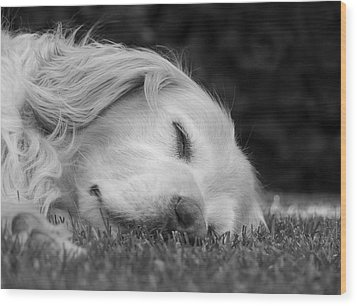 Golden Retriever Dog Sweet Dreams Black And White Wood Print by Jennie Marie Schell