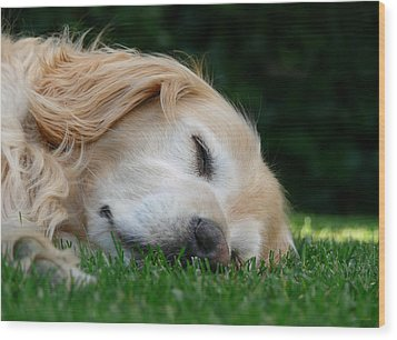 Golden Retriever Dog Sweet Dreams Wood Print by Jennie Marie Schell