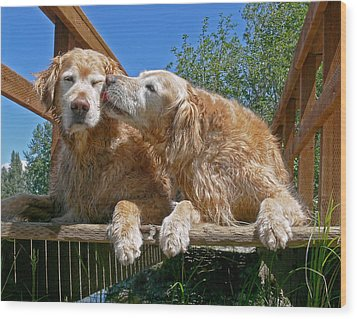 Golden Retriever Dogs The Kiss Wood Print by Jennie Marie Schell