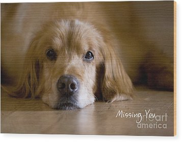 Golden Retriever Missing You Wood Print by James BO  Insogna