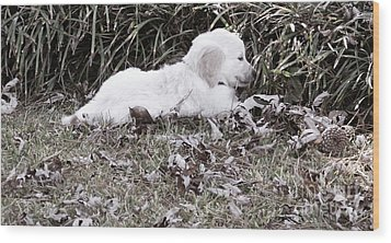 Golden Retriever Puppy 2 Wood Print by Andrea Anderegg