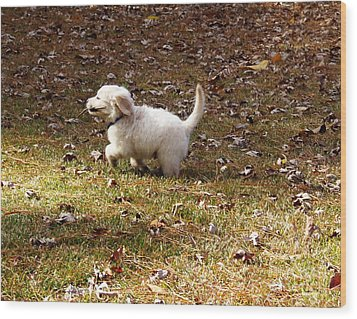Golden Retriever Puppy Wood Print by Andrea Anderegg