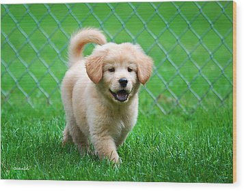 Golden Retriever Puppy Wood Print by Christina Rollo