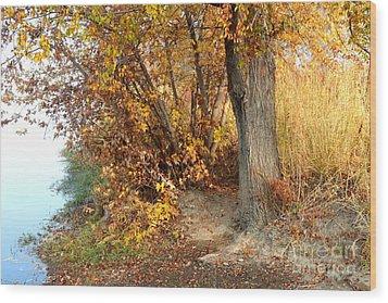 Golden Riverbank Wood Print by Carol Groenen