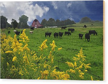 Golden Rod Black Angus Cattle  Wood Print