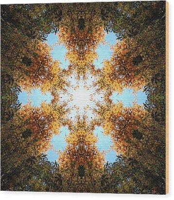 Golden Shimmer K2 Wood Print by Derek Gedney