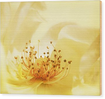 Golden Showers Rose Wood Print by Deborah Smith