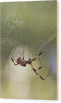 Golden-silk Spider Wood Print
