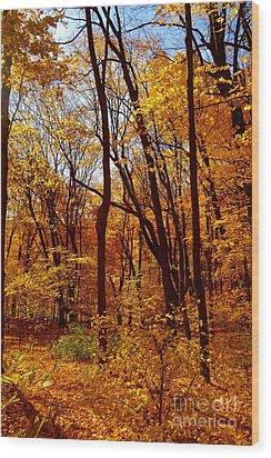 Golden Splendor Wood Print