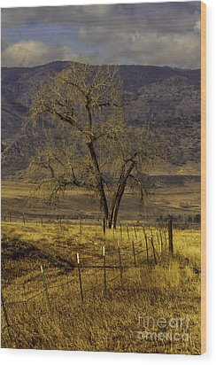 Wood Print featuring the photograph Golden Tree by Kristal Kraft